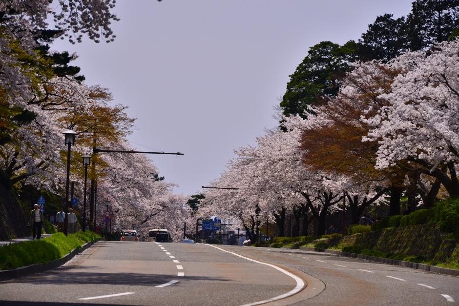 2014.04.12金沢城日中の桜5