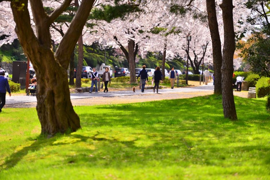 2014.04.12金沢城日中の桜4