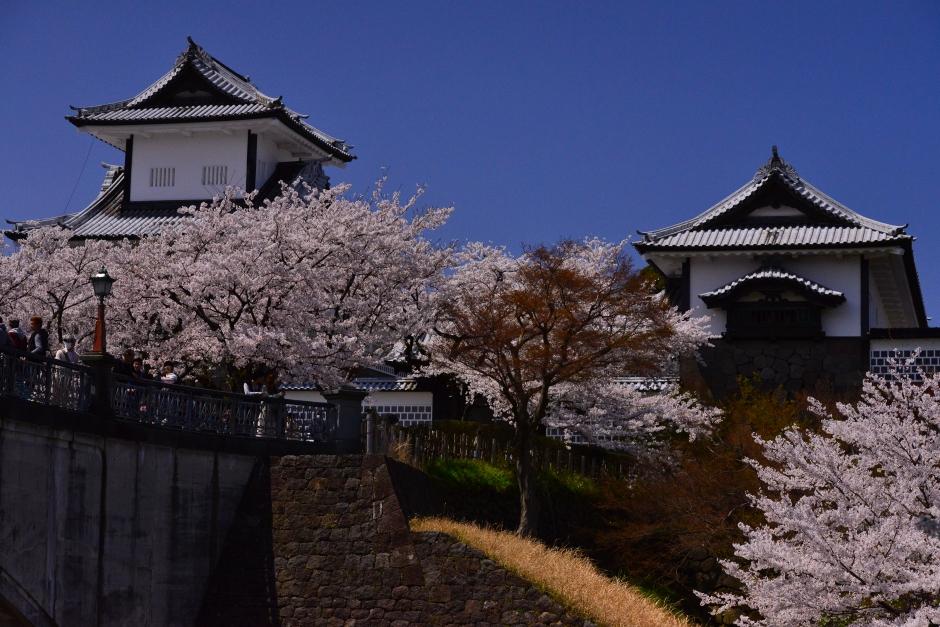 2014.04.12金沢城日中の桜2