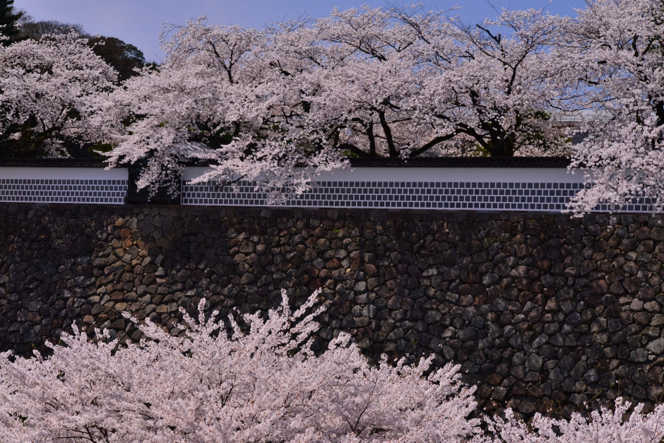 2014.04.12金沢城日中の桜3