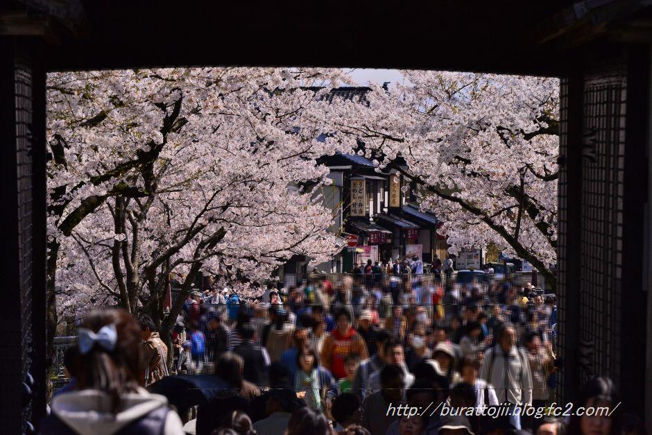2014.04.12金沢城日中の桜1