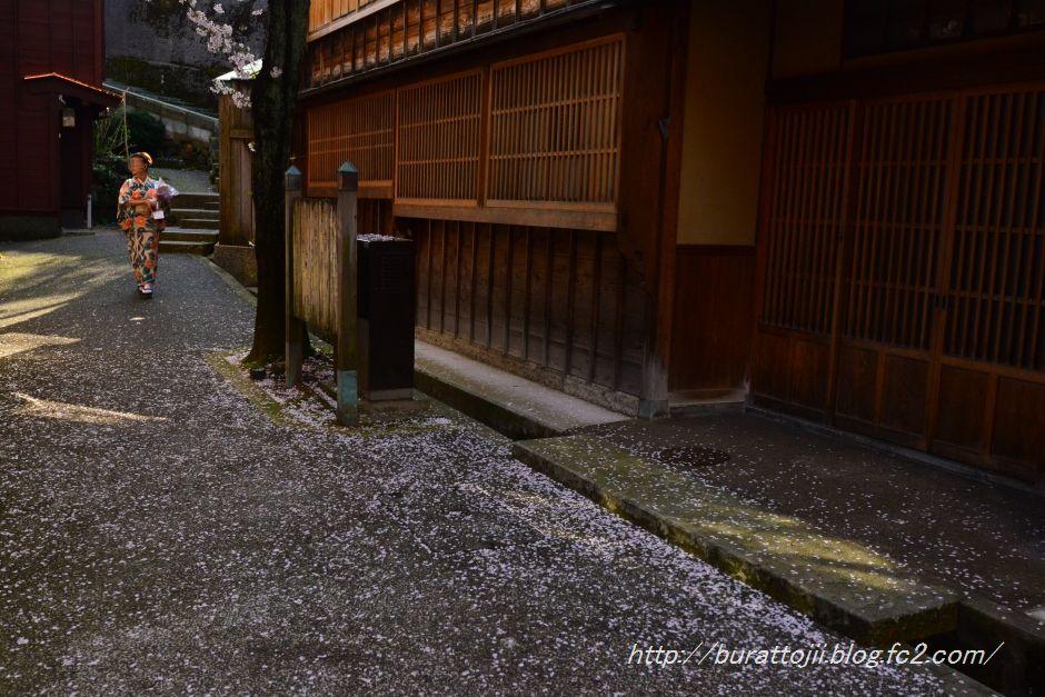 2014.04.12主計町の桜4
