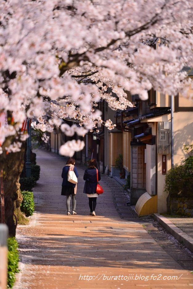 2014.04.12主計町の桜2