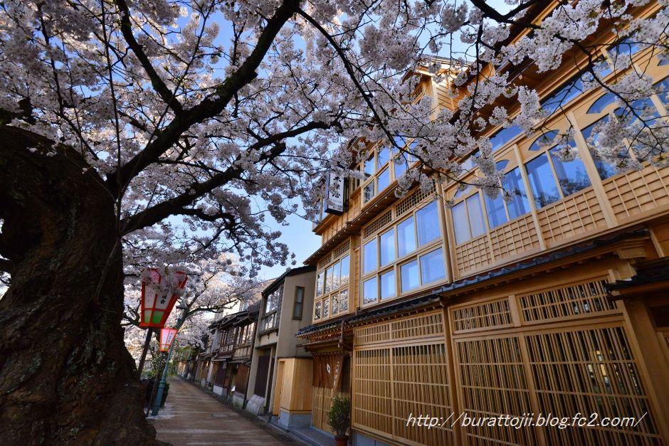 2014.04.12主計町の桜1