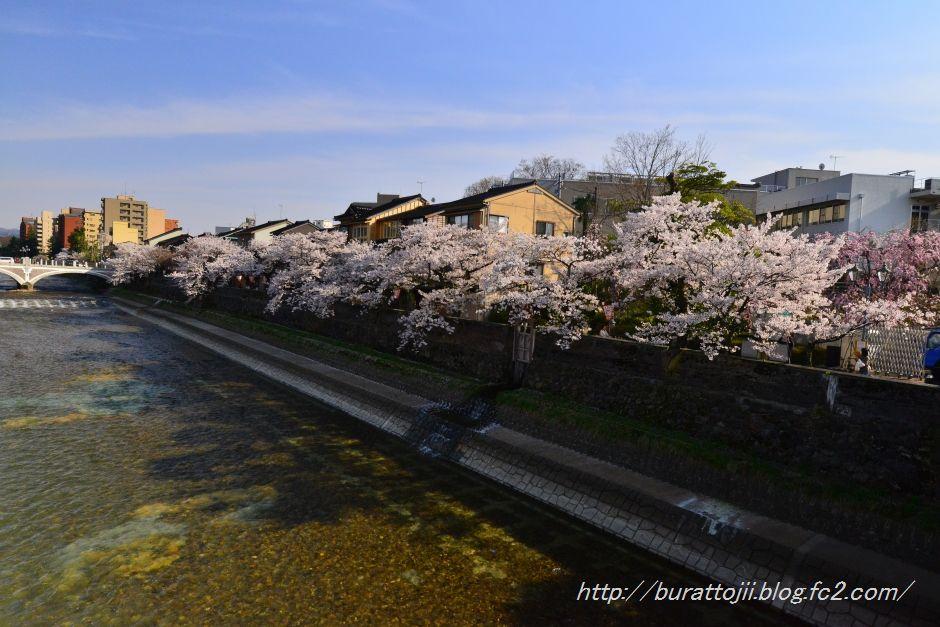 2014.04.12主計町の桜8