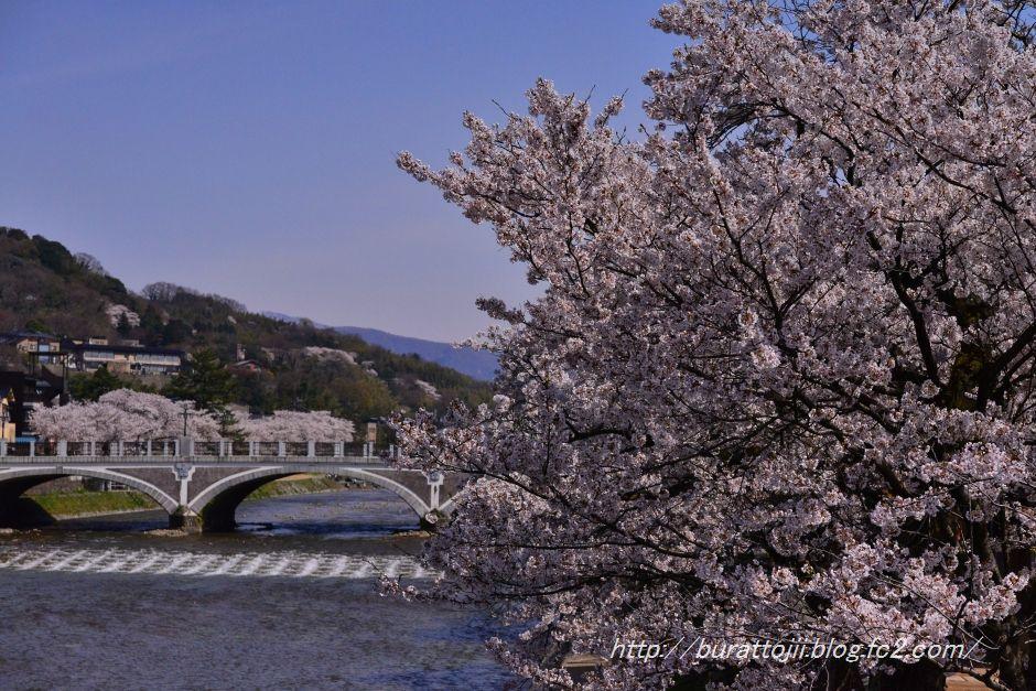 2014.04.12主計町の桜7