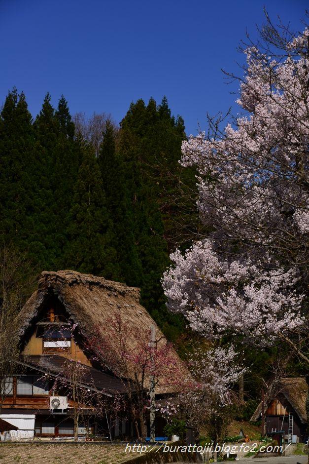 2014.04.23白川郷下ゴソ付近5