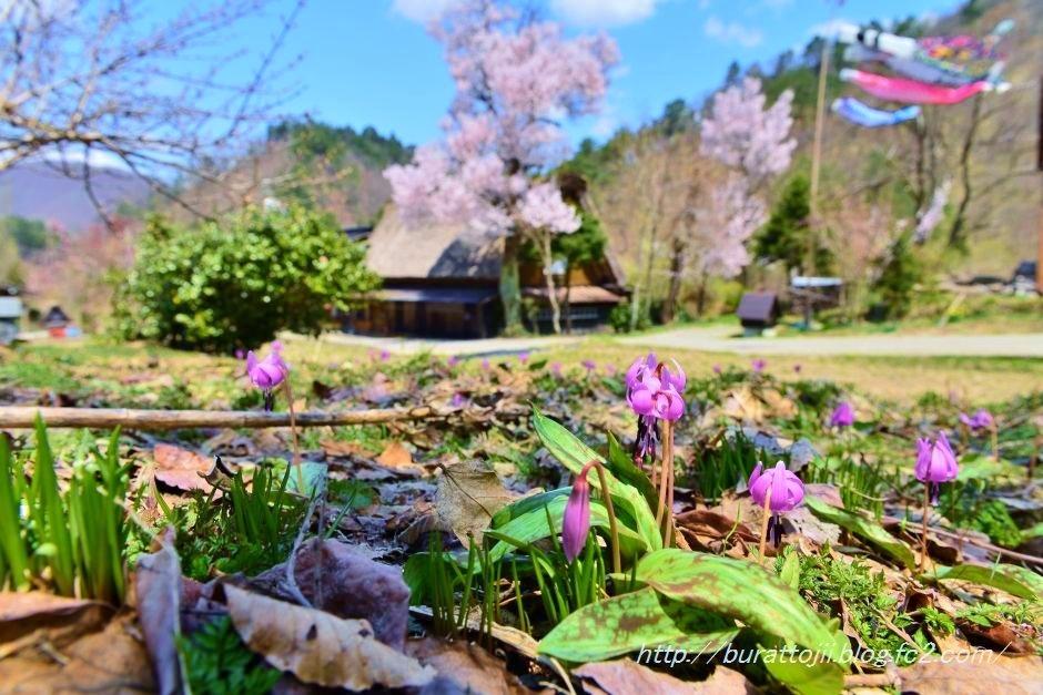 2014.04.23白川郷下ゴソ付近3