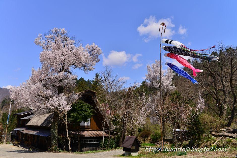 2014.04.23白川郷下ゴソ付近1