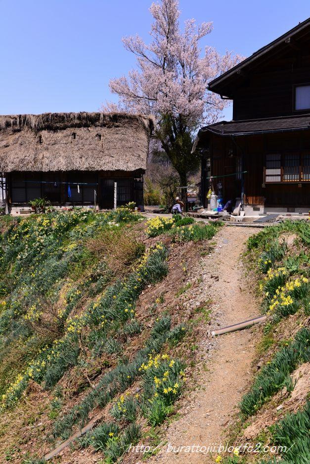 2014.04.23白川郷萩町中央付近6
