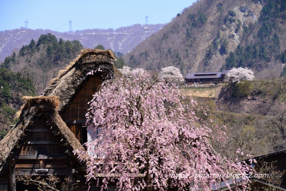 2014.04.23白川郷萩町中央付近4