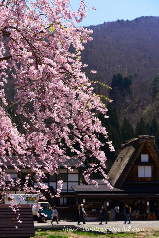 2014.04.23白川郷萩町中央付近3