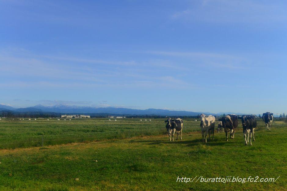 2014.05.18河北潟の牧場3