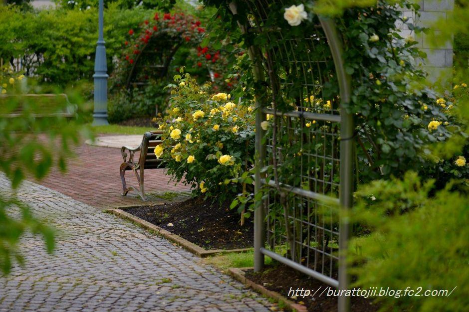 2014.05.23金沢姉妹都市公園のバラなど2