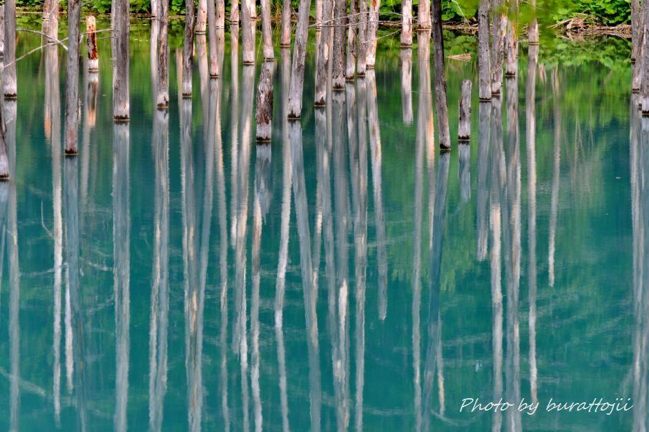 2014.06.08青い池5