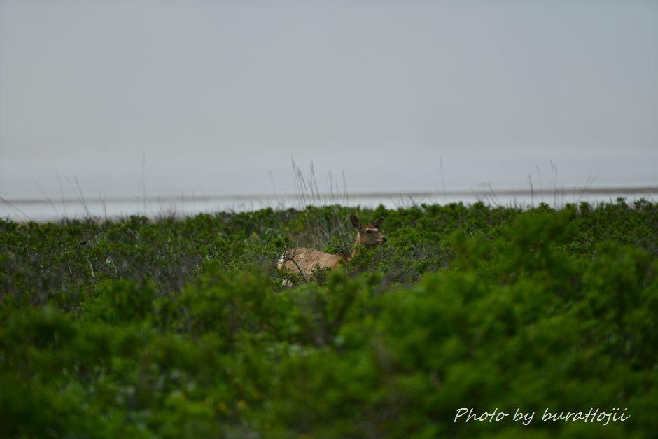 2014.06.15野付半島トドワラへの散策路4