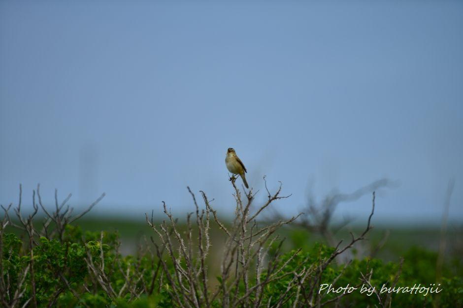 2014.06.15野付半島トドワラへの散策路5