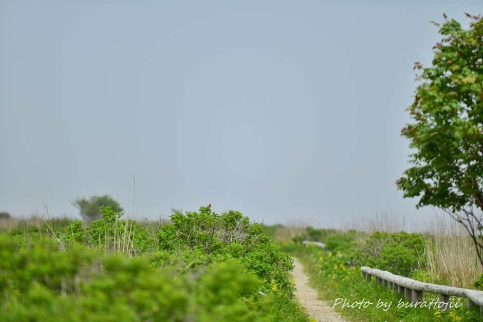 2014.06.15野付半島トドワラへの散策路1