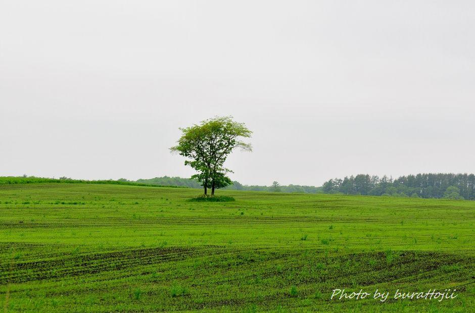 2014.06.16根室半島の風景6