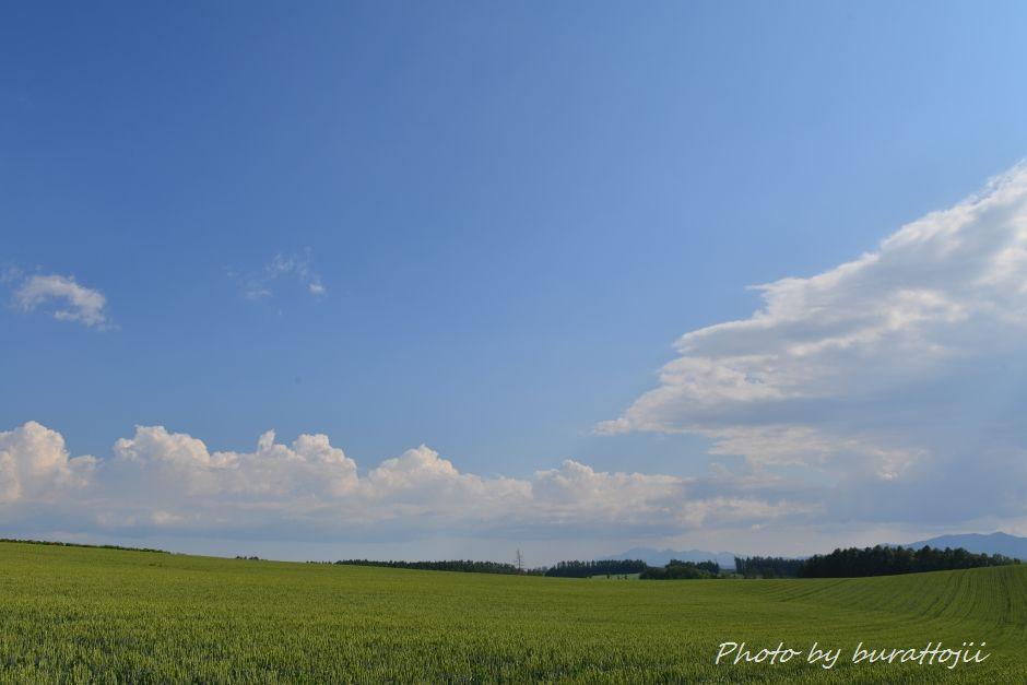2014.06.26美瑛の丘8
