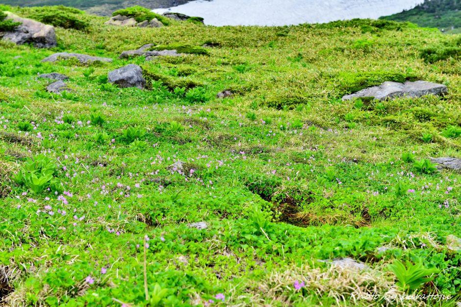 2014.07.21白山登山26