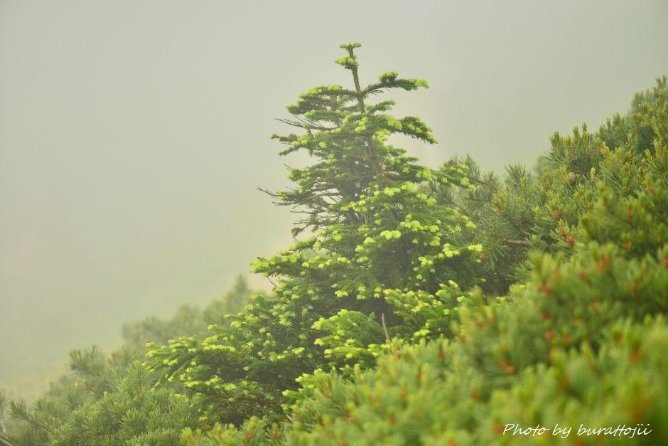 2014.07.22別山36