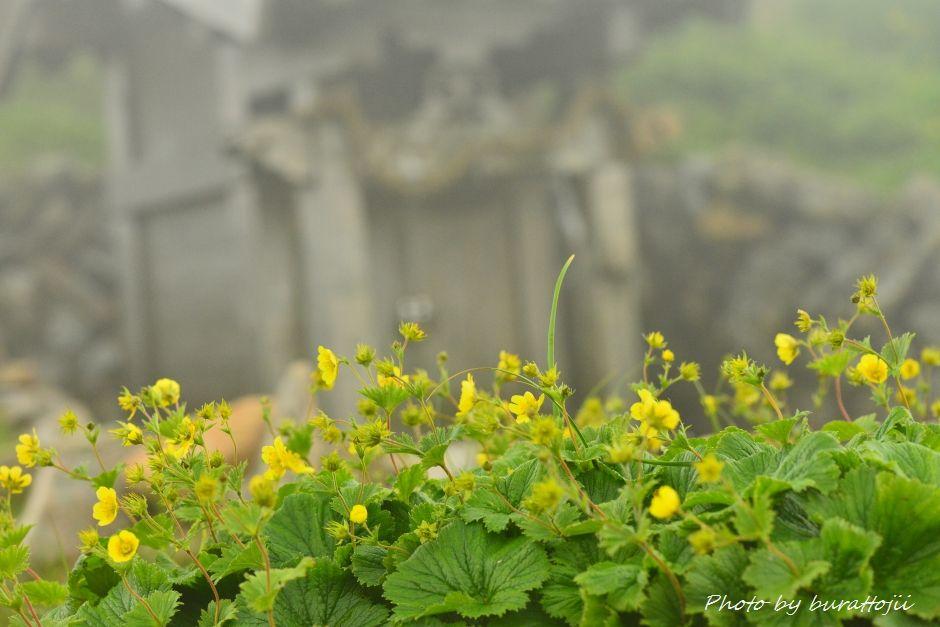 2014.07.22別山33ミヤマキンバイ