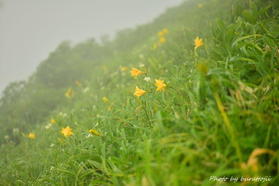 2014.07.22別山30ニッコウキスゲ