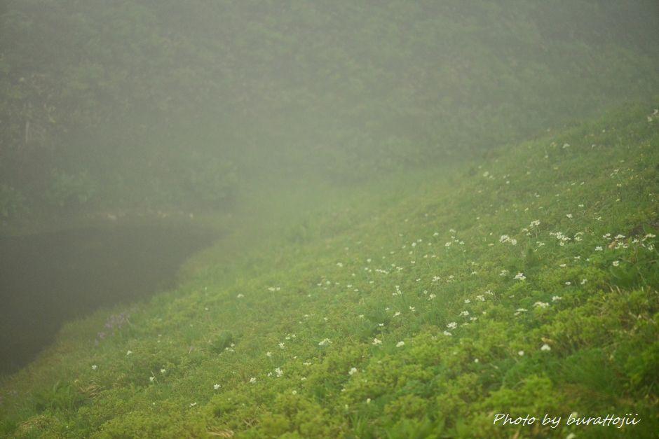 2014.07.22別山21チングルマ群生