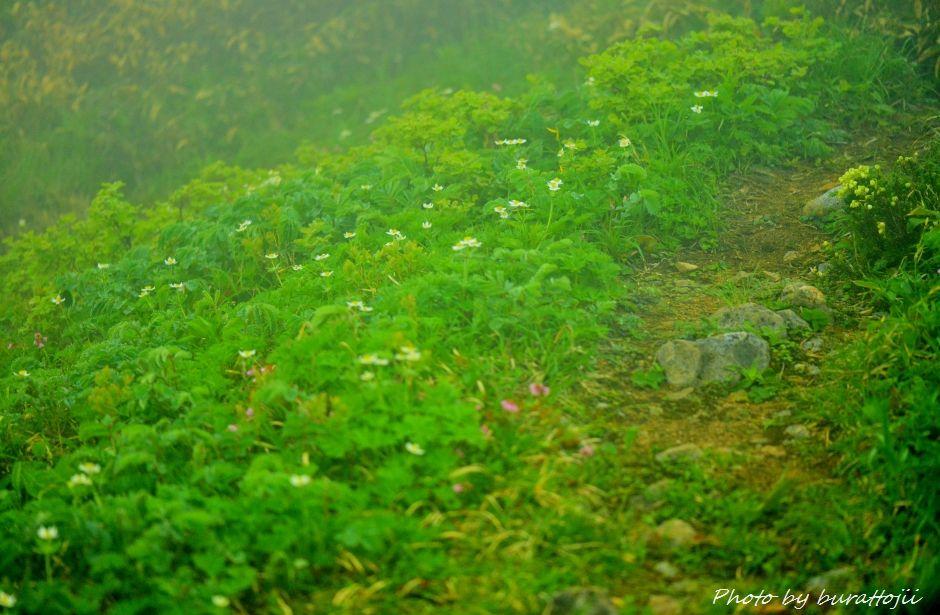 2014.07.22別山7天池付近