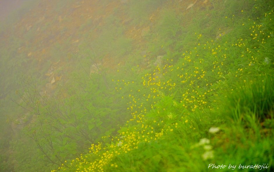 2014.07.22別山3ミヤマキンバイ
