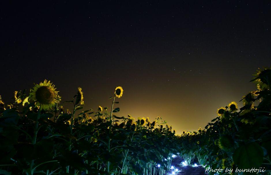 2014.07.25河北潟の夜景2ひまわり村