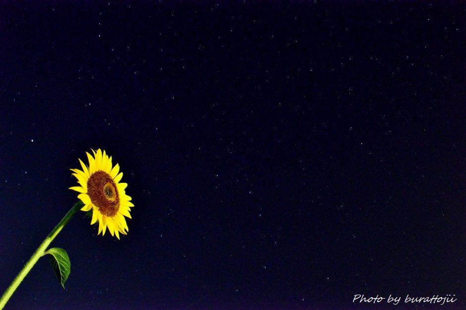 2014.07.25河北潟の夜景3ひまわり村