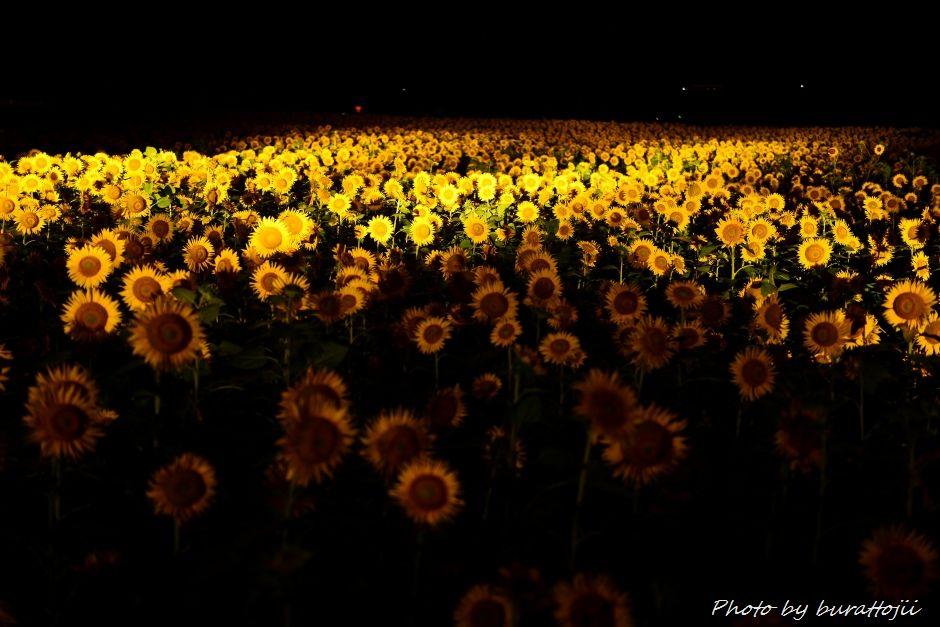 2014.07.25河北潟の夜景1ひまわり村