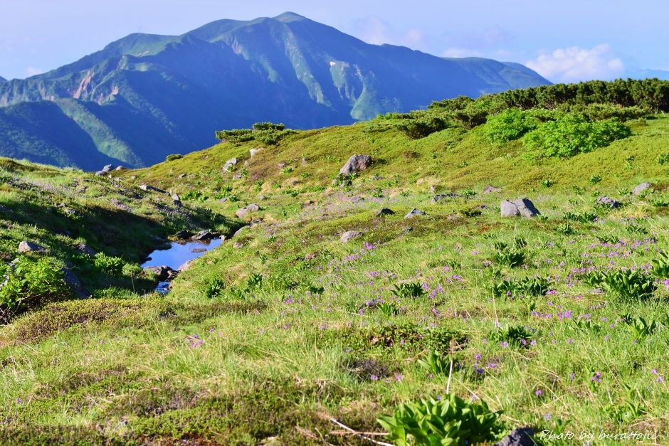 2014.07.29お池めぐりコース14ハクサンコザクラと別山