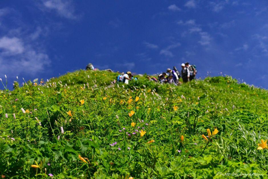 2014.07.29観光新道の花々10馬のたて髪付近ニッコウキスゲ、イブキトラノオ、ハクサンフウロなど