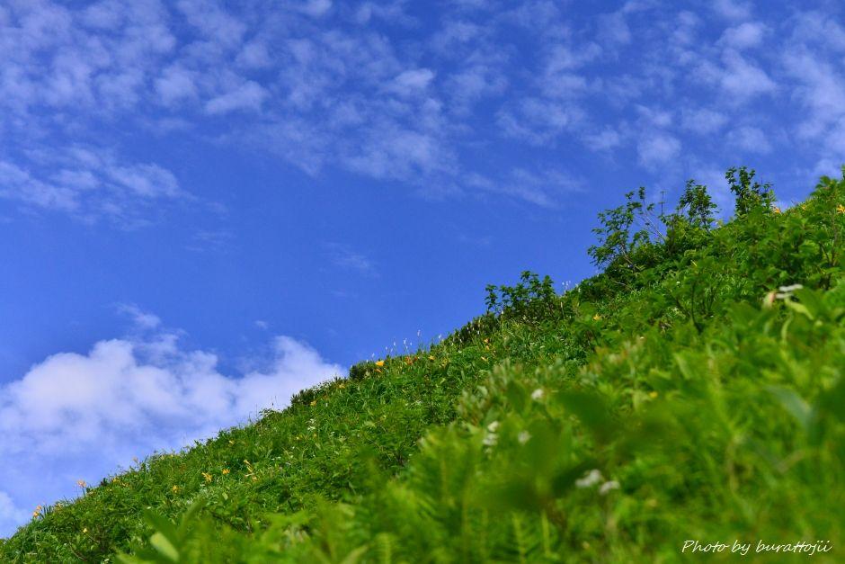 2014.07.29観光新道の花々4ニッコウキスゲなど