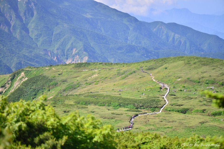 2014.07.29観光新道の花々1五葉坂から弥陀ヶ原エコーラインの登山者