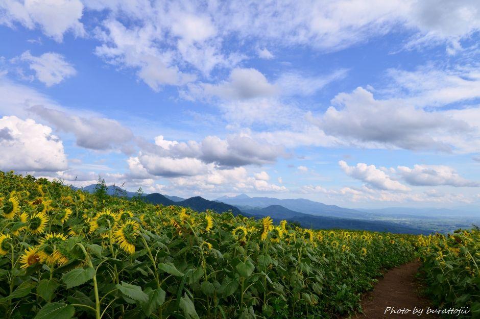 2014.08.21三ノ倉ひまわり畑2