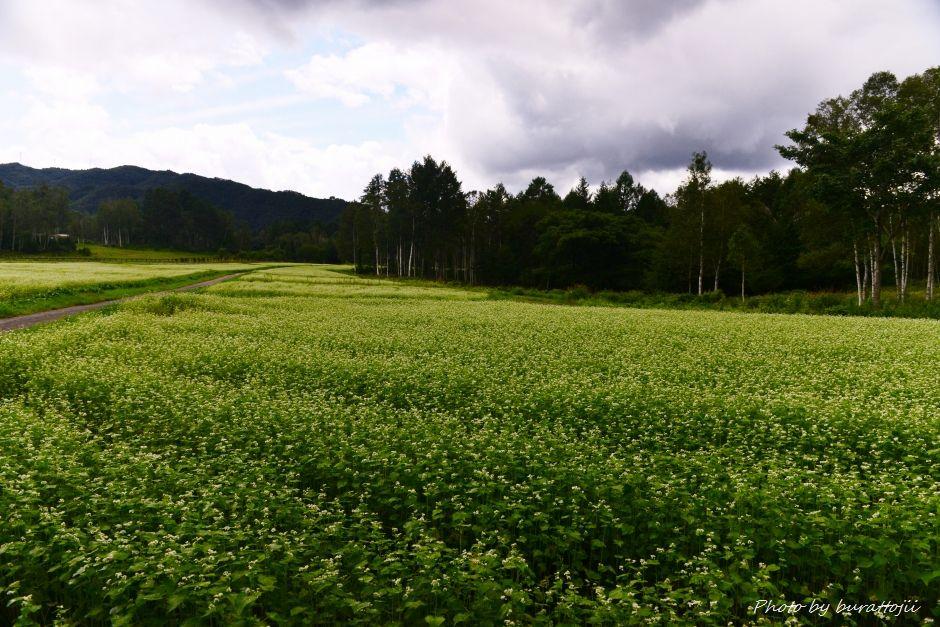 2014.08.27そば畑1