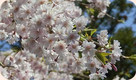 輝く花花花