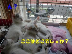 眠れる子猫ちゃん③