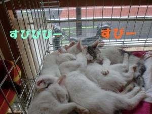 眠れる子猫ちゃん①