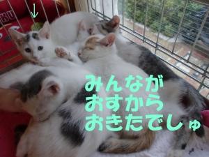 眠れる子猫ちゃん④