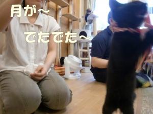 黒猫さん①