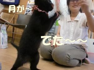 黒猫さん②