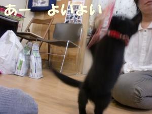 黒猫さん③
