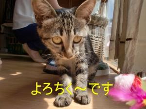 7月21日エリーちゃん?'
