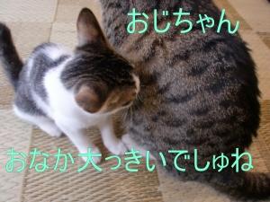ポキ (5)'