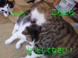 ポキ (3)'